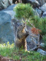 Marmottes 12